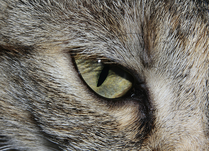 5 animals and some amazing facts about their eyes