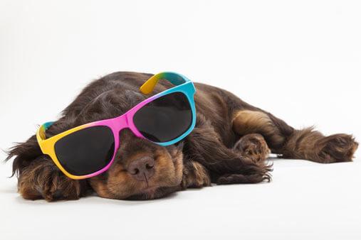 International sunglasses day 2016!