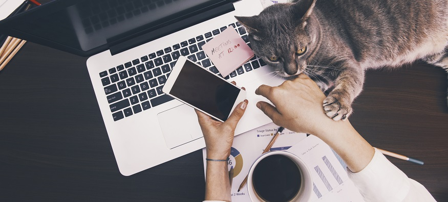 a woman working from home on her sofa with a cat